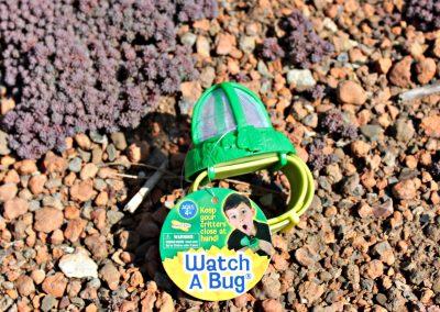 bug watch